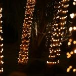 Coconut trees dressed with fairylights