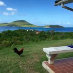 view from patio with our rooster pal