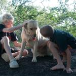 Our kids loved the dogs here!