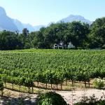 Photo de MolenVliet Oosthuizen Family Vineyards