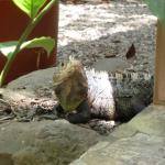 A resident lizard we saw each day.