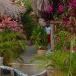 Enchanting floral covered walkways, and warm hospitality make Catcha special place on the Negril