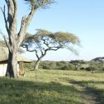 Φωτογραφία: Lemala Ndutu Tented Camp