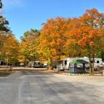 Tranquil Timbers Camping Resort Foto