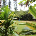 Foto di Haiku Plantation Inn: Maui Bed and Breakfast