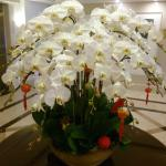 Stunning orchid arrangement in lobby