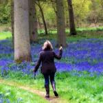Walking at Blickling National Trust Estate