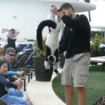 Fantastic animal show