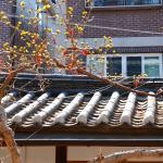 WWOOF Korea Guesthouse照片