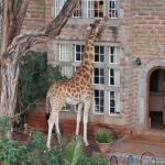 Photo of Giraffe Manor