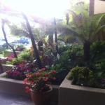 Plants outside lobby