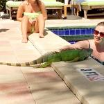 unexpected but a regular poolside friendly visitor!!