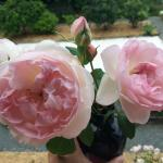 Fresh picked roses from their garden