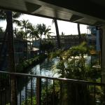 view from the lanai of dolphin pond