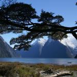 Milford Sound Fly - Cruise - Fly Foto