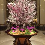 Imperial Hotel Lobby Cherry Blossom display, March 2015
