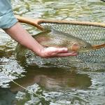 Introductory Flyfishing trips