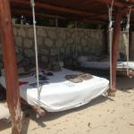 Highly-prized beach beds