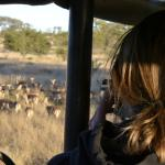 Safari in Kruger