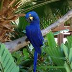 One of the several parrots in the lobby/front courtyard area