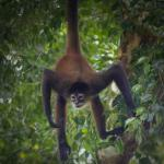 I wonder why they call it a Spider monkey.