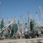 No shortage of shrimp and fresh seafood in Puerto Peñasco