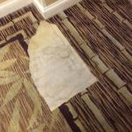missing carpet sections in hallway