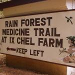 Interesting guided walk on the medicine trail