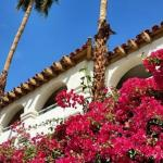 Palms and bougainvillea.