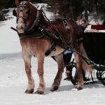 """our sleigh ride with """"Ralph""""."""
