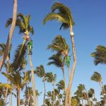 COCOTAL for all the coconut trees