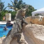 Iguanas everywhere during the day - don't seem to be too bothered with all the people!
