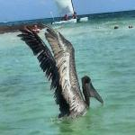 My personal favorite! Like the Iguanas and Coatis, the pelicans didn't seem to mind the people.