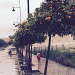 Orange trees lined the streets