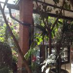 The greenery in the hotel courtyard was a respite