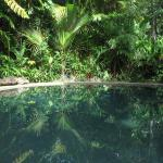 Daintree Rainforest Retreat Foto