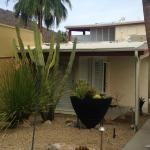 cool landscaping with succulents and deset plants