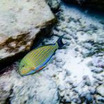 Fish right outside the deck of our villa