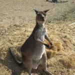 Foto de Eleanor River Homestead - Kangaroo Island