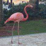 One of the 4 flamingoes who live here