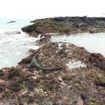 Beach Front Tide Pools and Marine Iguanas