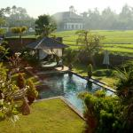 Garden and pool with rice field views