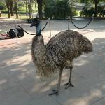 An Emu at the resort