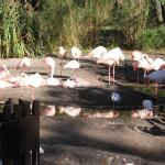 Don't miss the flamingo behind the pool area