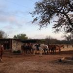Foto de Mayan Dude Ranch