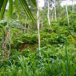 Photo de Munduk Moding Plantation