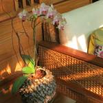 Sitting area and orchid in Lobby