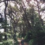 nature trail to the beach
