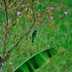 Bee eaters in the bushes outside our room