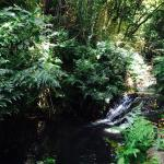 WaIcyI stream, swimming holes leads to giant waterfall on property